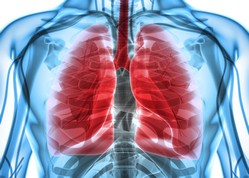 asbestos pleural thickening found